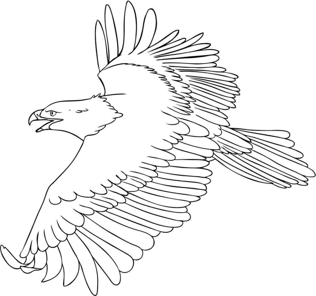 eagle color page free printable bald eagle coloring pages for kids page color eagle