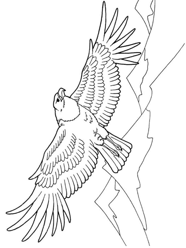 eagle color page printable bald eagle coloring pages for kids cool2bkids page eagle color