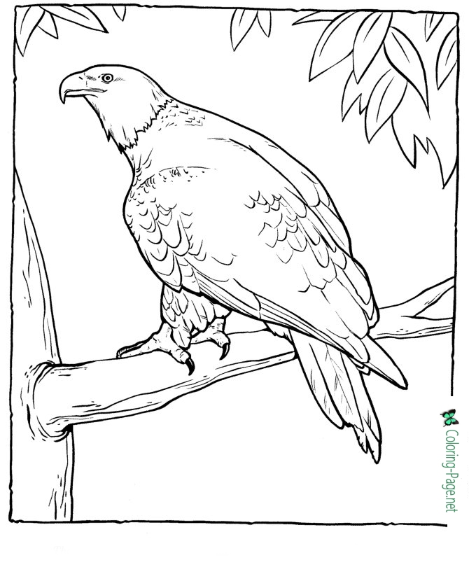 eagle coloring images american eagle coloring pages coloring images eagle