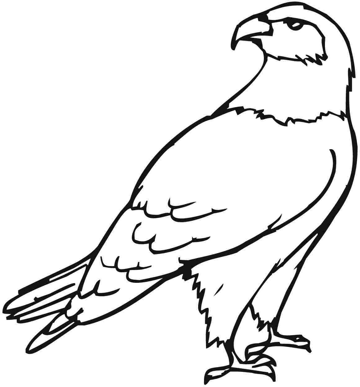 eagle coloring images bald eagle easy drawing at getdrawings free download coloring eagle images