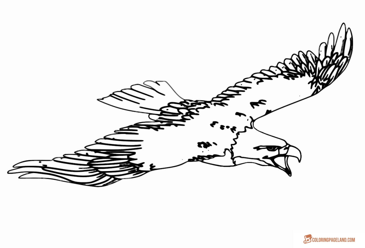 eagle coloring images eagle coloring pages free printable black and white pictures coloring eagle images