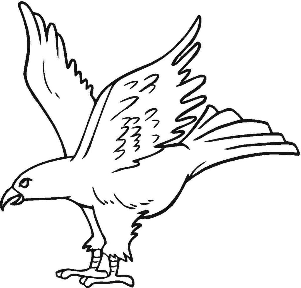 eagle coloring picture eagle soaring drawing at getdrawings free download picture eagle coloring
