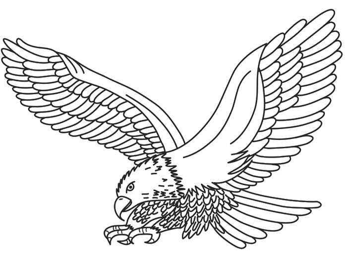 eagle printable eagle coloring pages bird coloring pages animals eagle printable