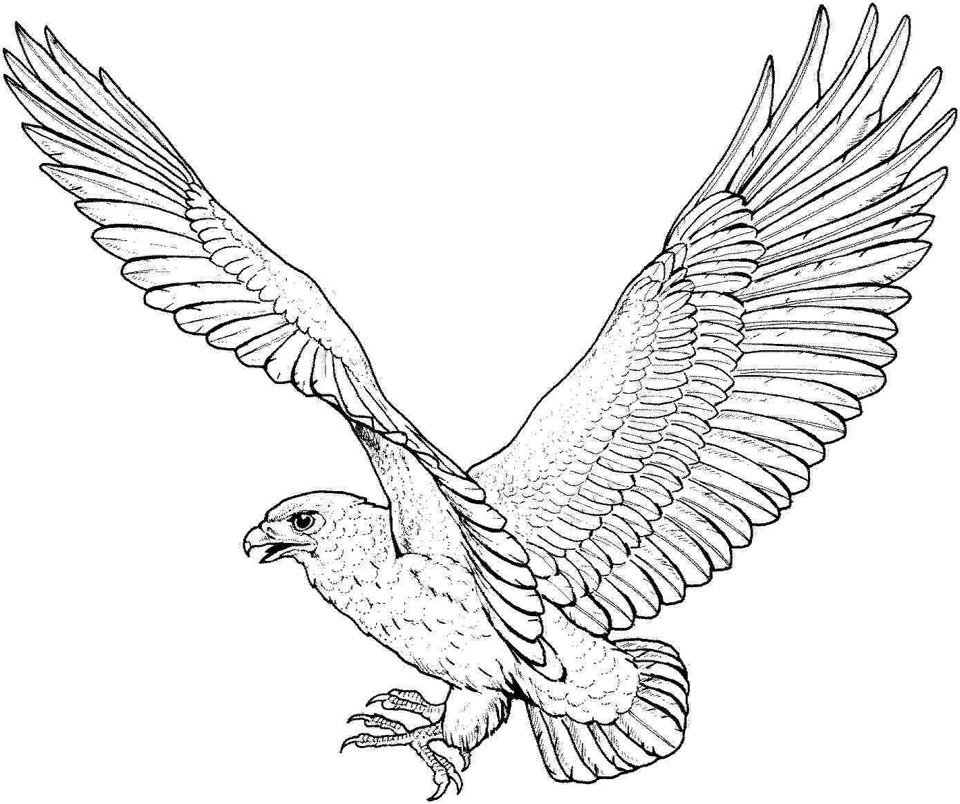 eagle printable eagle coloring pages for adults at getcoloringscom free printable eagle