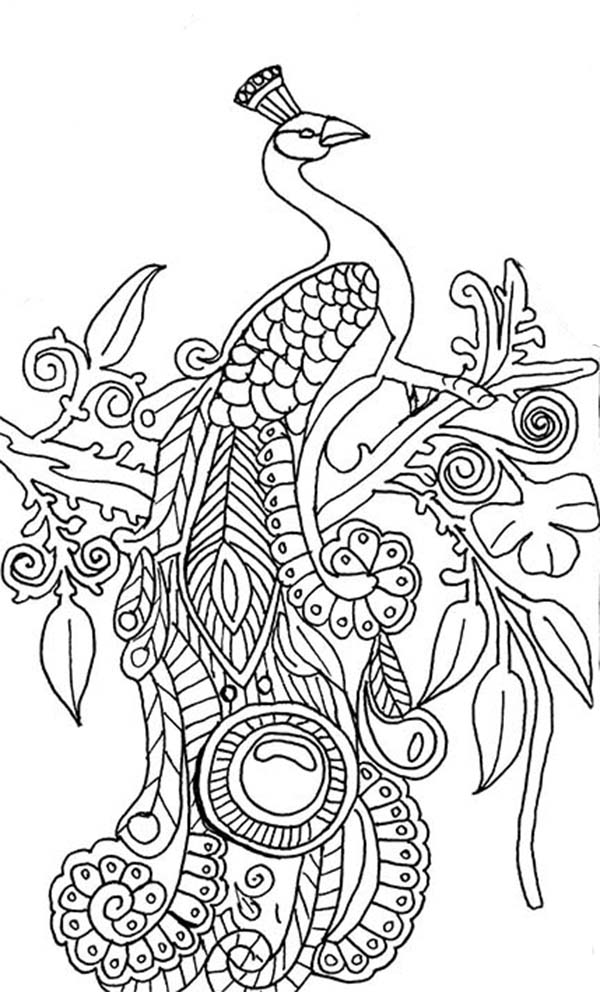 easy printable peacock coloring pages peacock drawing step by step at getdrawings free download easy coloring pages printable peacock