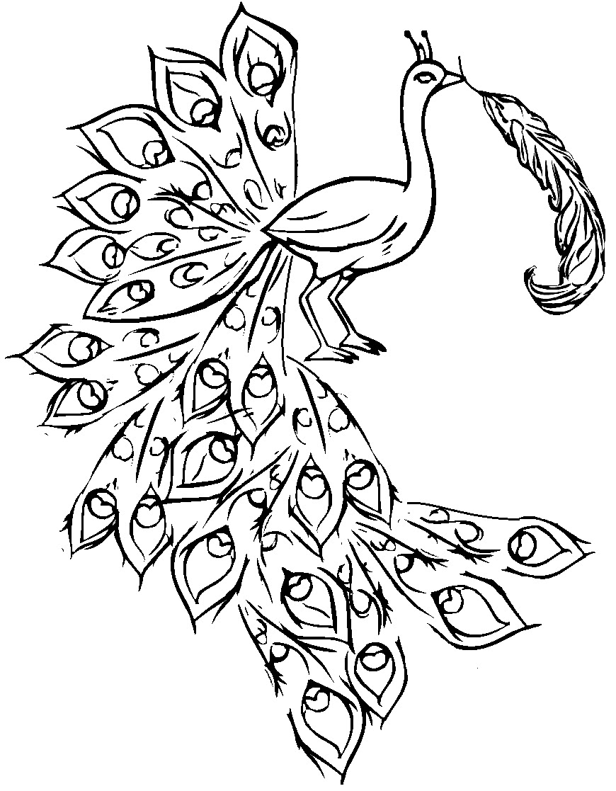 easy printable peacock coloring pages peacock simple drawing at getdrawings free download easy pages peacock printable coloring