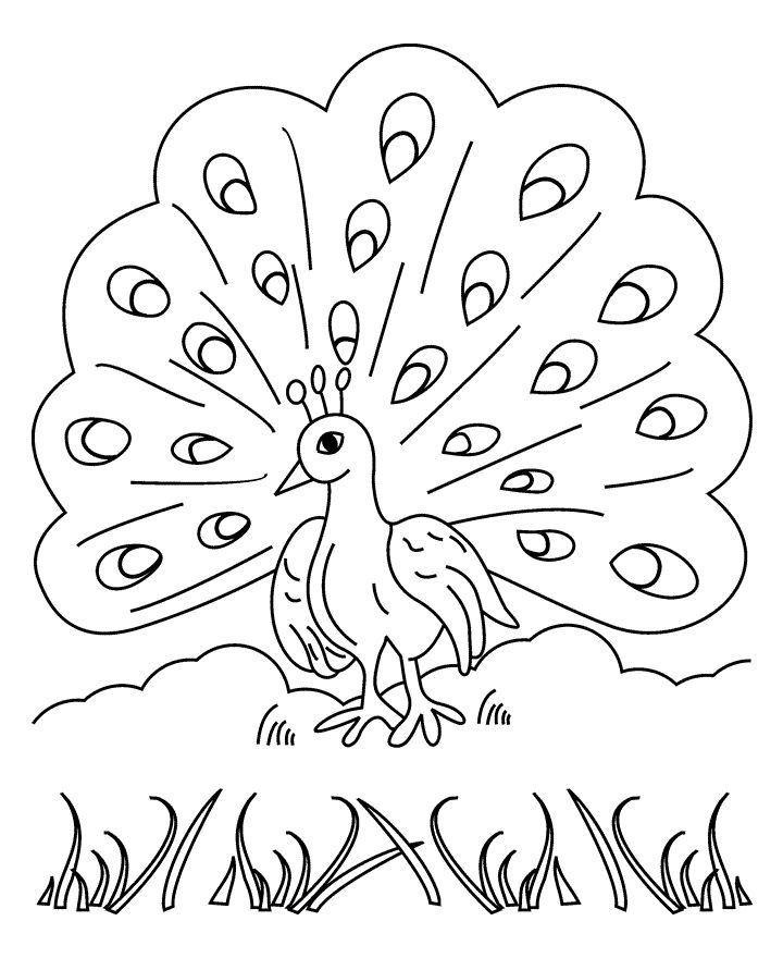easy printable peacock coloring pages peacocks for children peacocks kids coloring pages peacock easy pages printable coloring