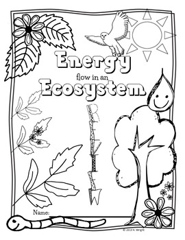 ecosystem coloring worksheet pdf food chain food web ecosystem energy review poster coloring pdf ecosystem worksheet