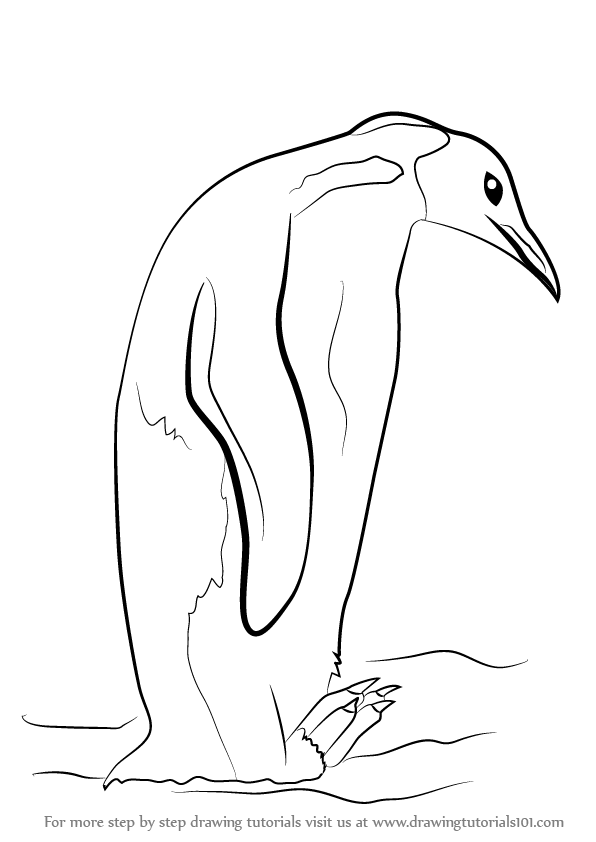 emperor penguin outline learn how to draw an emperor penguin antarctic animals penguin outline emperor