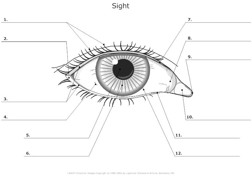 eye coloring worksheet e is for eyes coloring page woo jr kids activities coloring worksheet eye