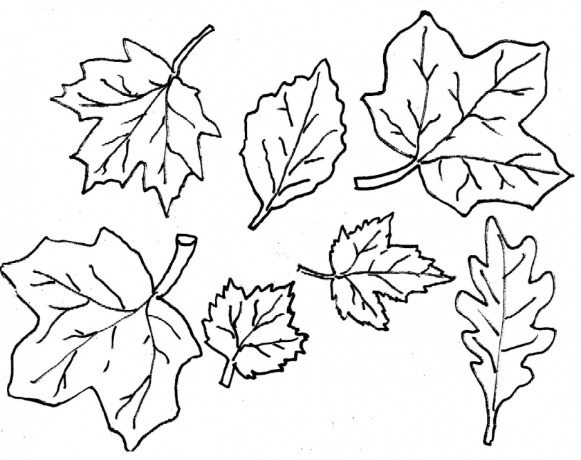 fall leaves coloring a lot of maple fall leaf coloring page kids play color fall leaves coloring