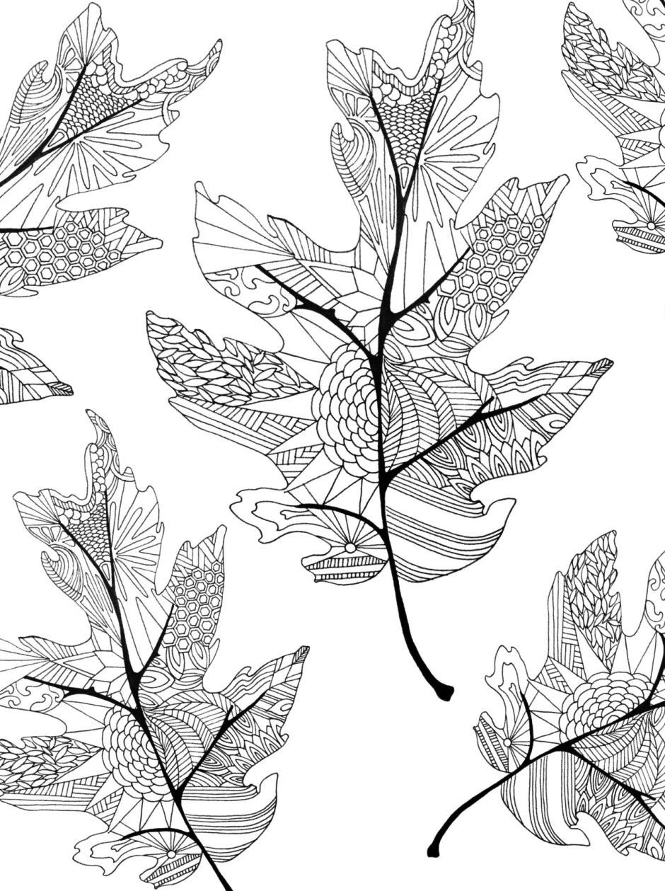 fall leaves coloring clip art fall leaves coloring page abcteach coloring fall leaves