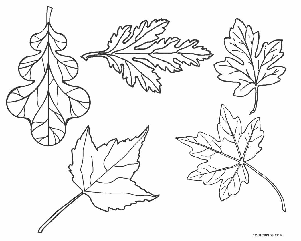 fall leaves coloring different type of autumn leaf coloring page download leaves coloring fall