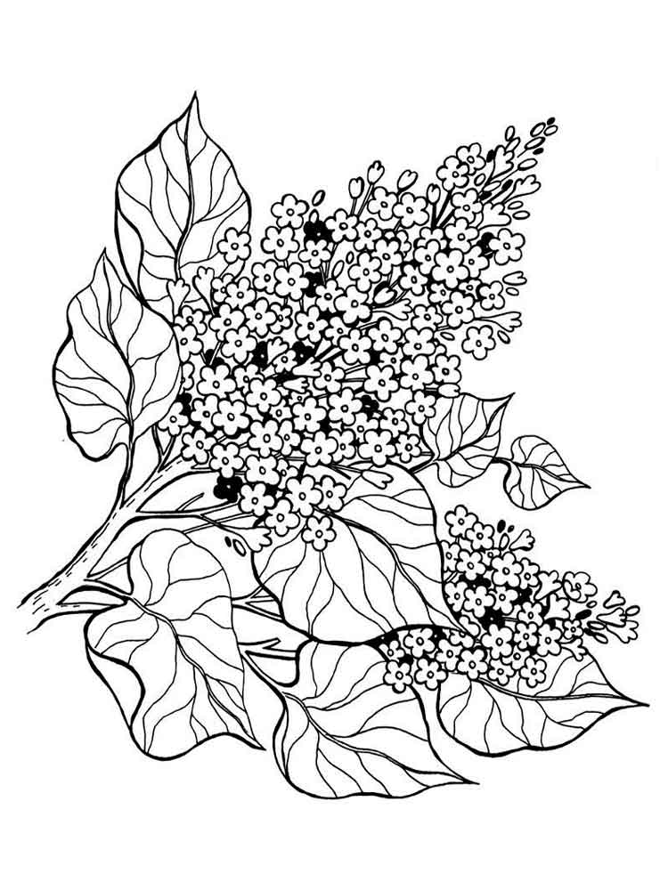 flower coloring book pages spring flower coloring pages to download and print for free coloring book pages flower