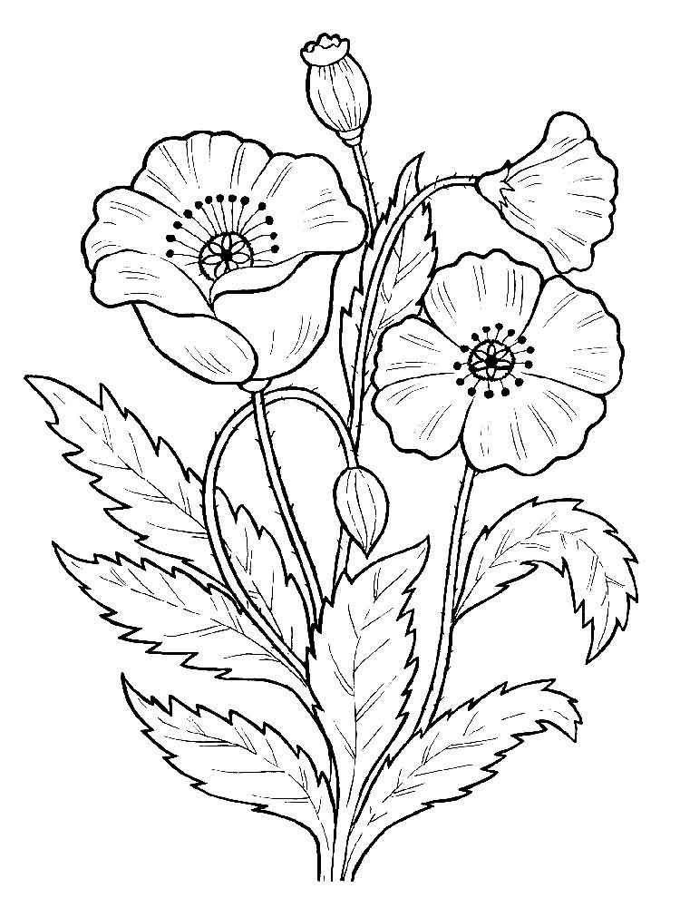 flower pattern coloring pages floral coloring pages for adults best coloring pages for coloring pattern flower pages