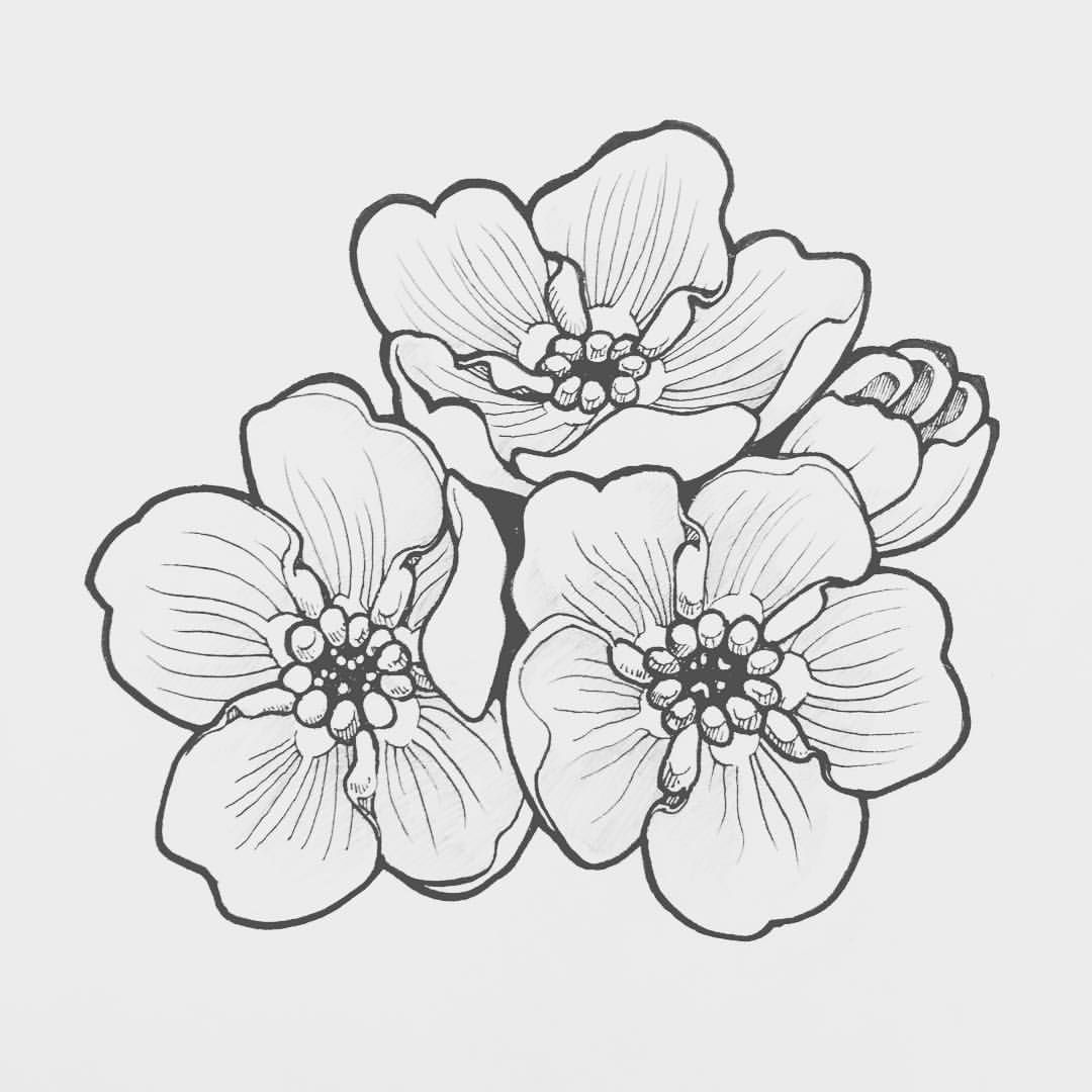 forget me not outline forget me not drawing at getdrawings free download not forget outline me