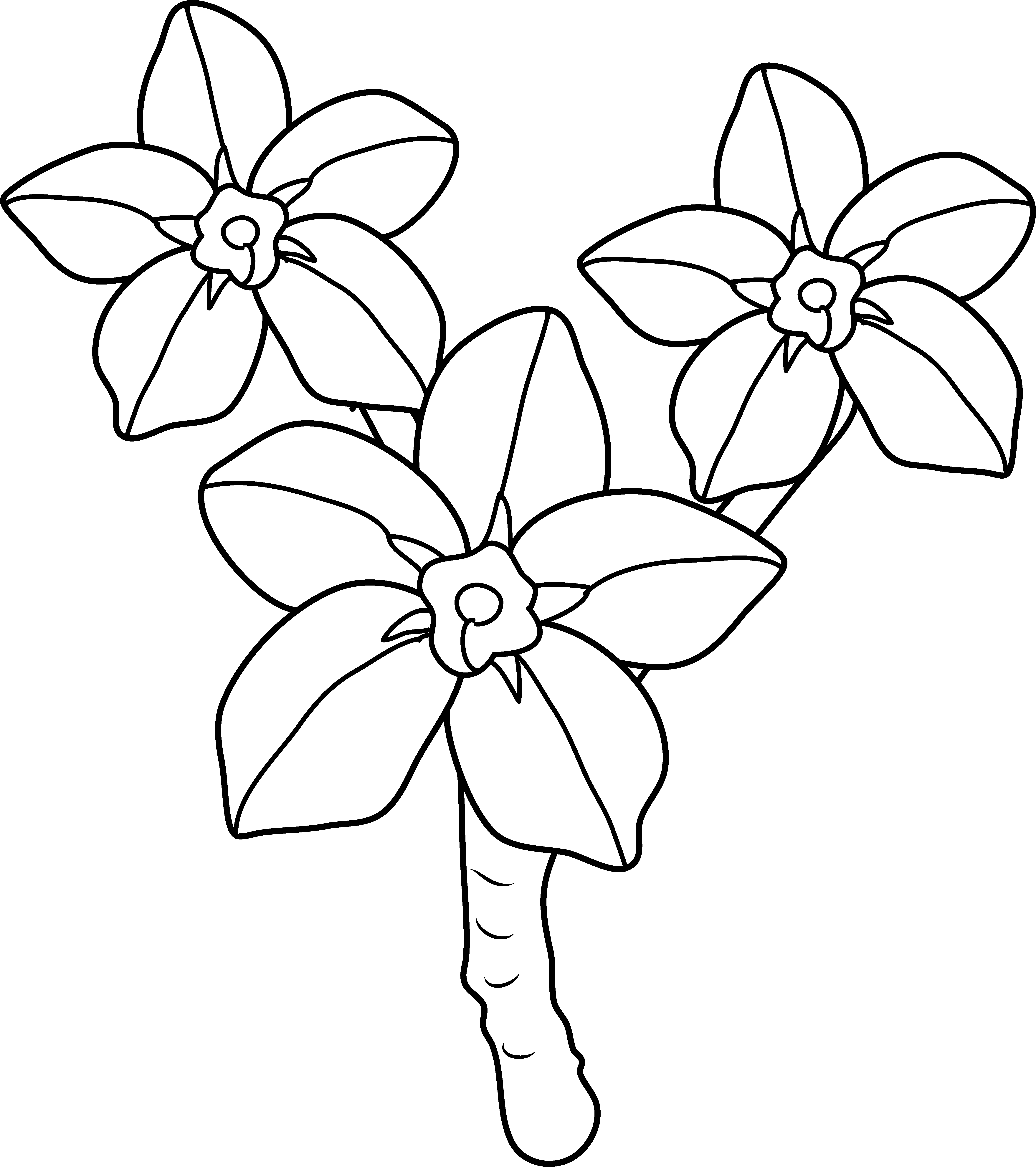 forget me not outline forget me not drawing at getdrawings free download not outline me forget