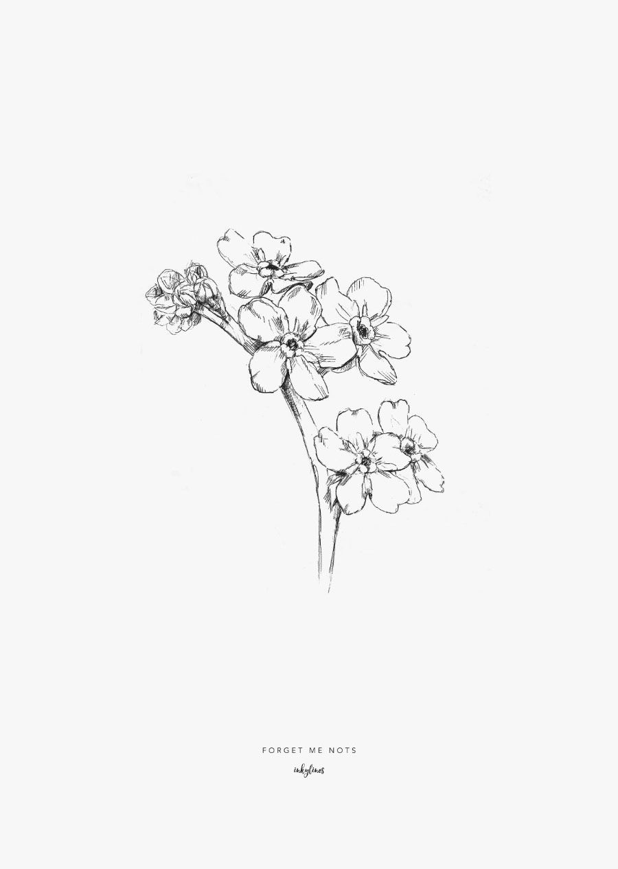 forget me not outline forget me not flower drawing at getdrawings free download not forget me outline
