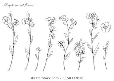 forget me not outline vector bouquet with outline forget me not or myosotis me forget outline not