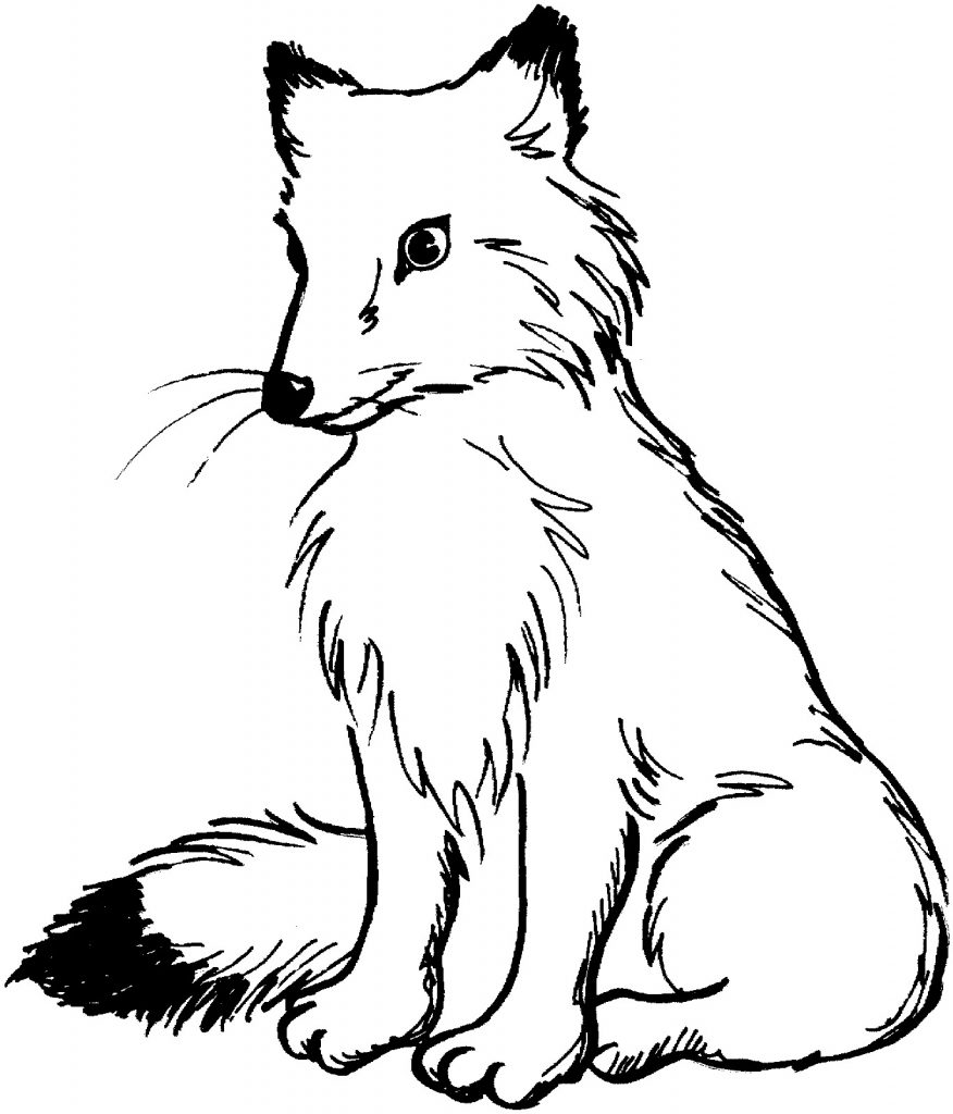 fox coloring free printable fox coloring pages for kids fox coloring