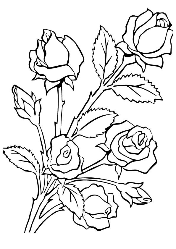 free coloring pages of roses 20 free printable roses coloring pages for adults coloring free roses of pages