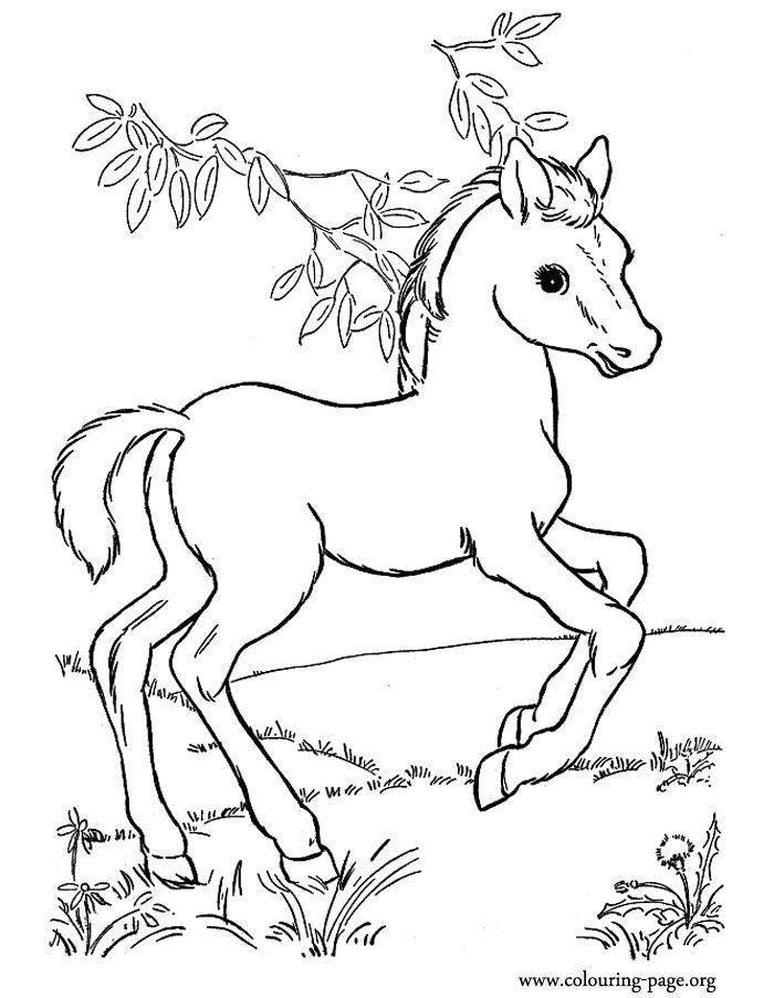 free printable coloring pages of horses running horse coloring page free printable coloring pages coloring horses pages of printable free