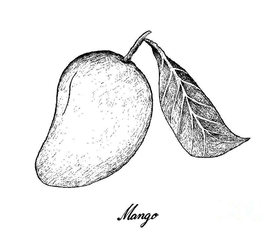 fruit drawing hand drawn background of australian black sapote and drawing fruit