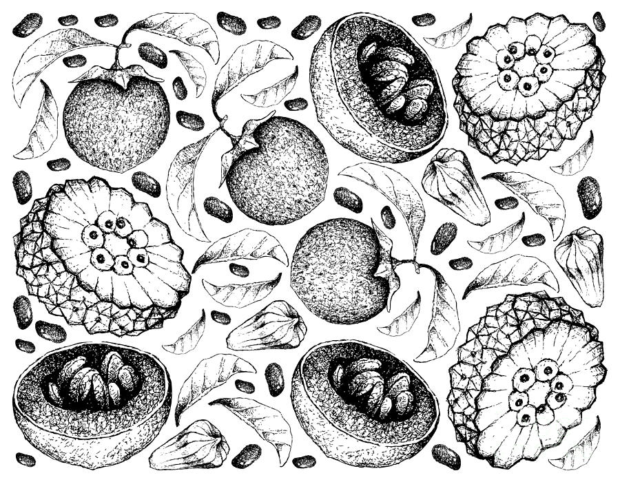 fruit drawing hand drawn background of fresh coconut fruits drawing by fruit drawing