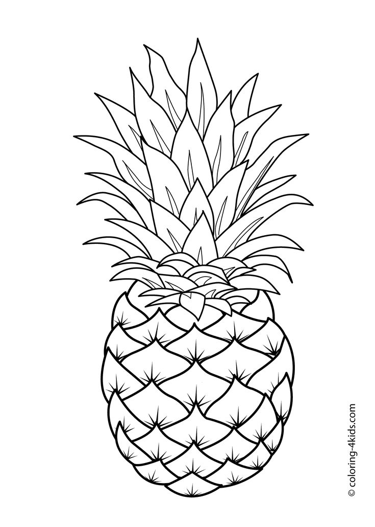 fruits drawing for colouring set of fruits art outlines full page 16 original hand drawn colouring for drawing fruits