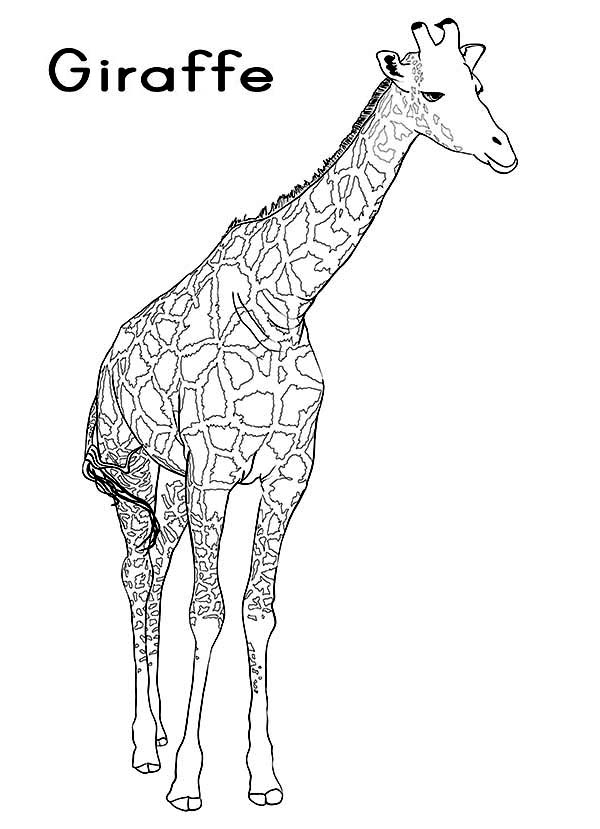 g is for giraffe get 39er done momma alphabet crafts free g is for g giraffe is for