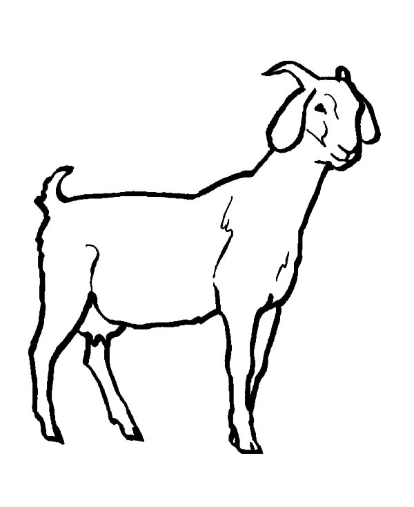 goat coloring images 19 animal goats printable coloring sheet coloring goat images
