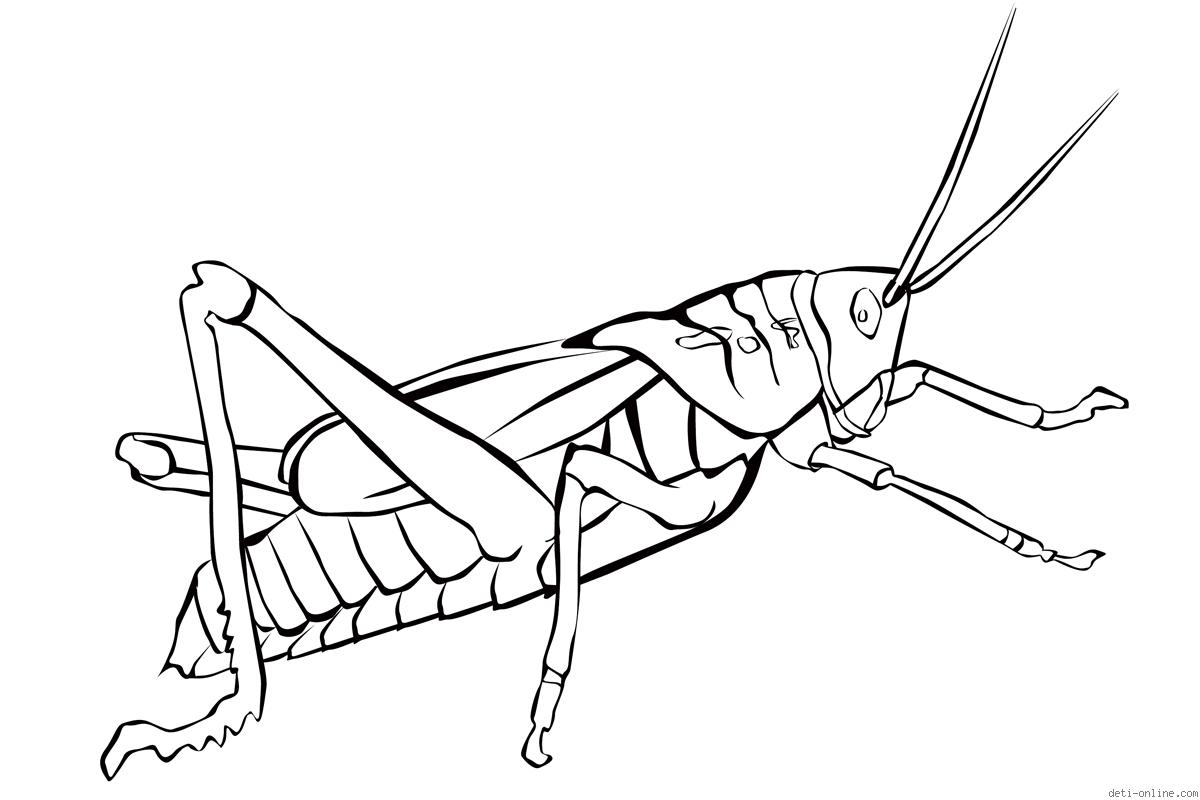 grasshopper coloring pages grasshopper coloring pages for kids preschool and coloring pages grasshopper