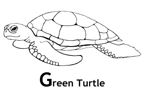 green coloring pages a healthy green broccoli coloring page kids play color green pages coloring