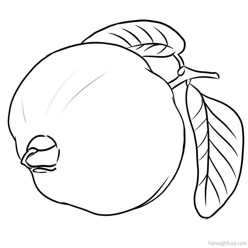 guava coloring pages guava coloring pages guava coloring pages