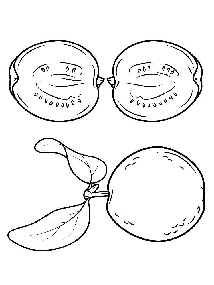 guava coloring pages guava coloring pages guava coloring pages 1 2