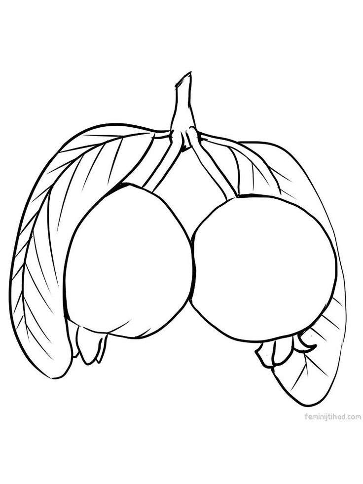 guava coloring pages guava tree coloring pages pages guava coloring