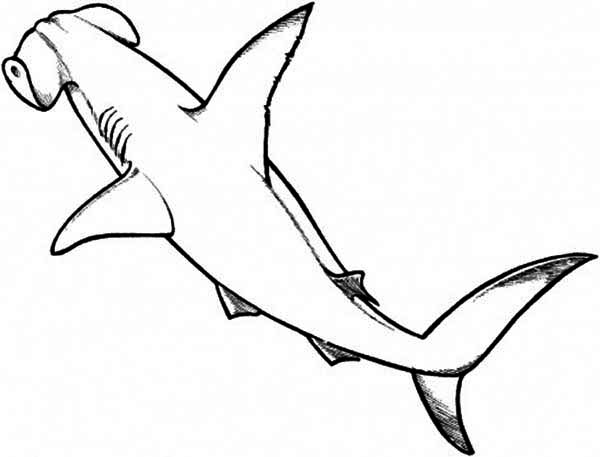 hammerhead shark pictures to color a realistic drawing of hammerhead shark coloring page hammerhead color to pictures shark
