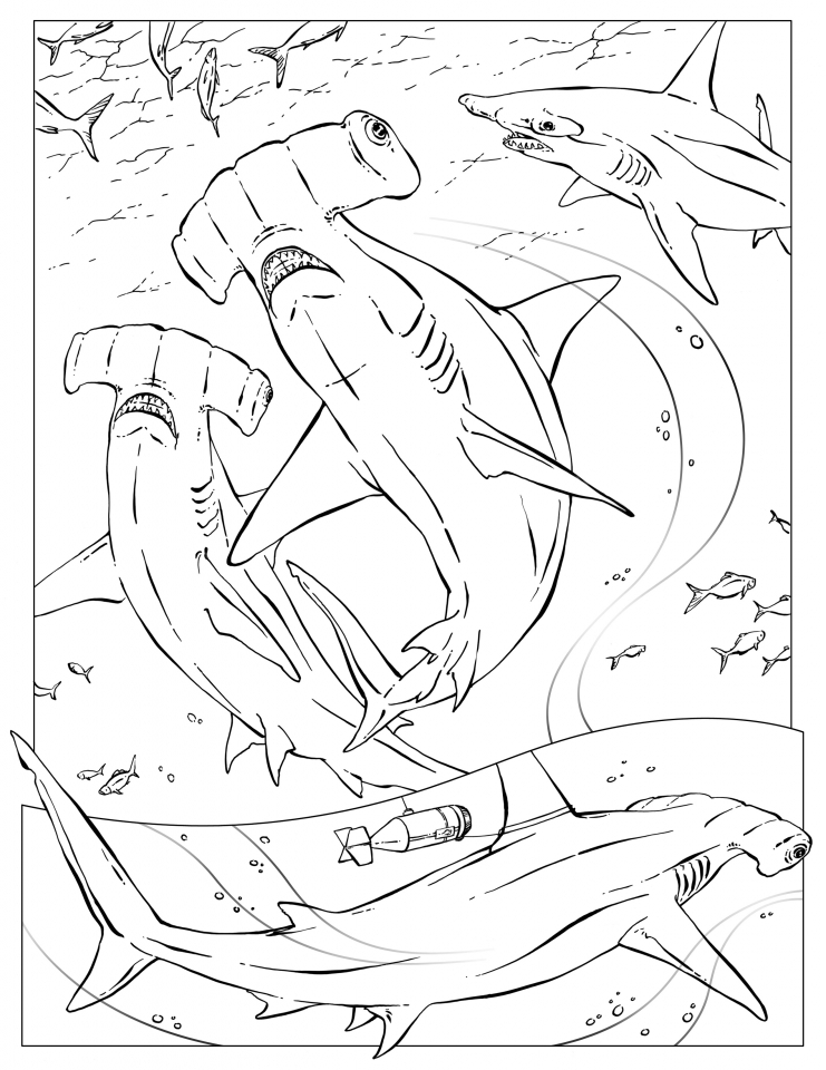 hammerhead shark pictures to color hammerhead shark coloring page proyectos colores shark hammerhead color pictures to