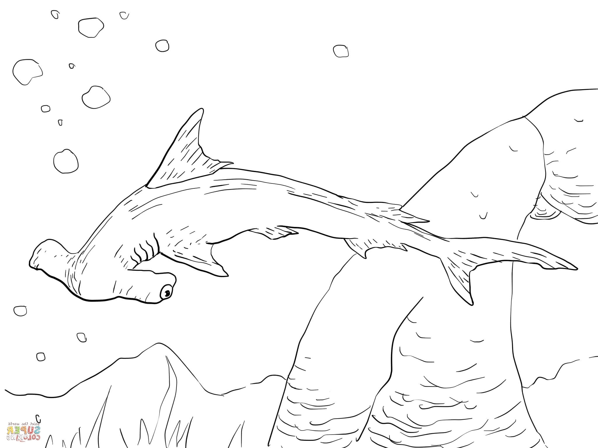 hammerhead shark pictures to color hammerhead shark coloring pages to print coloring home to hammerhead color pictures shark