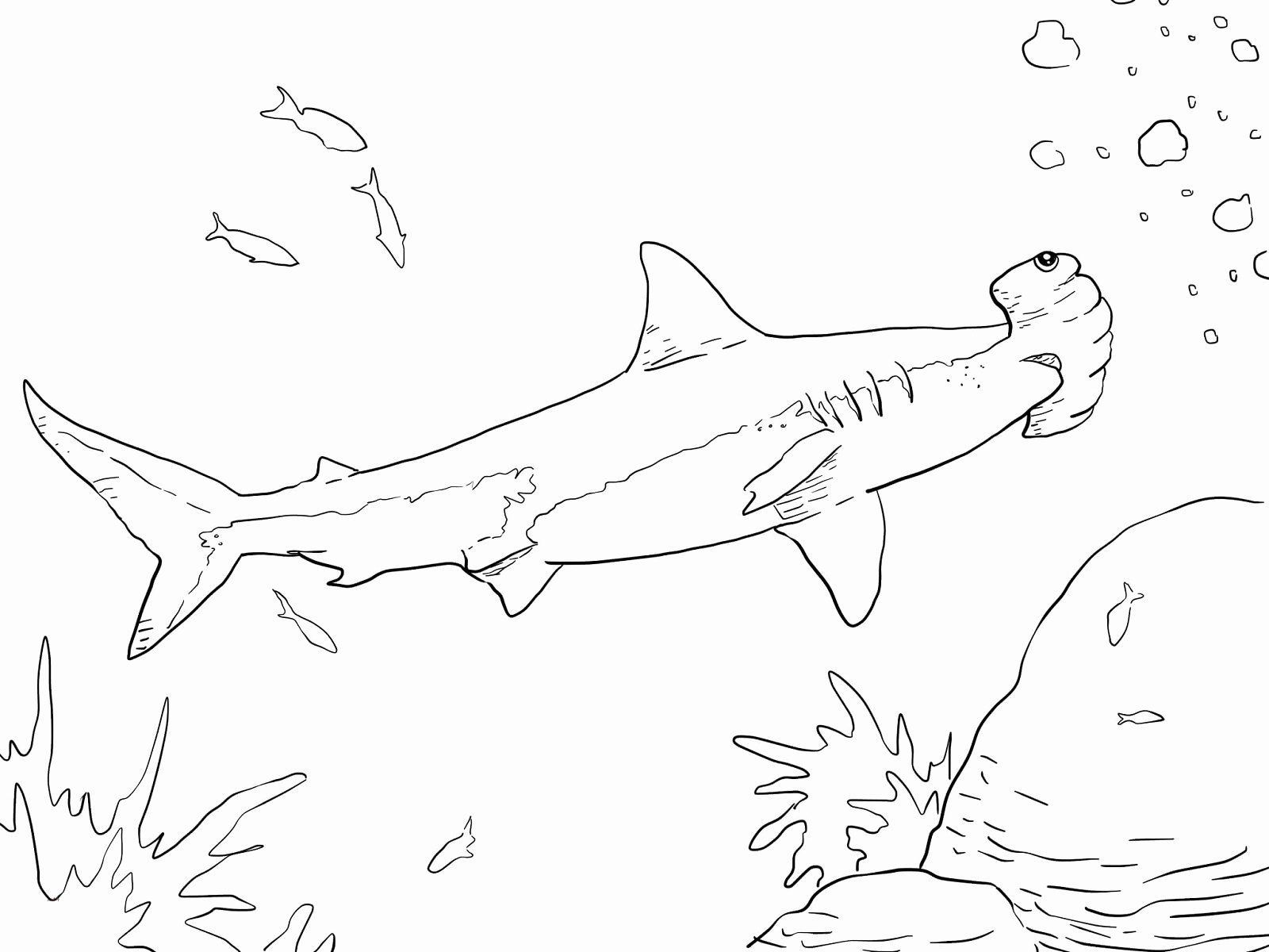 hammerhead shark pictures to color hammerhead shark cut out pattern clipart best color shark pictures to hammerhead