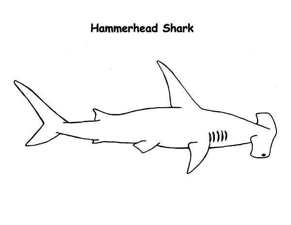 hammerhead shark pictures to color hammerhead shark cut out pattern clipart best shark color to pictures hammerhead