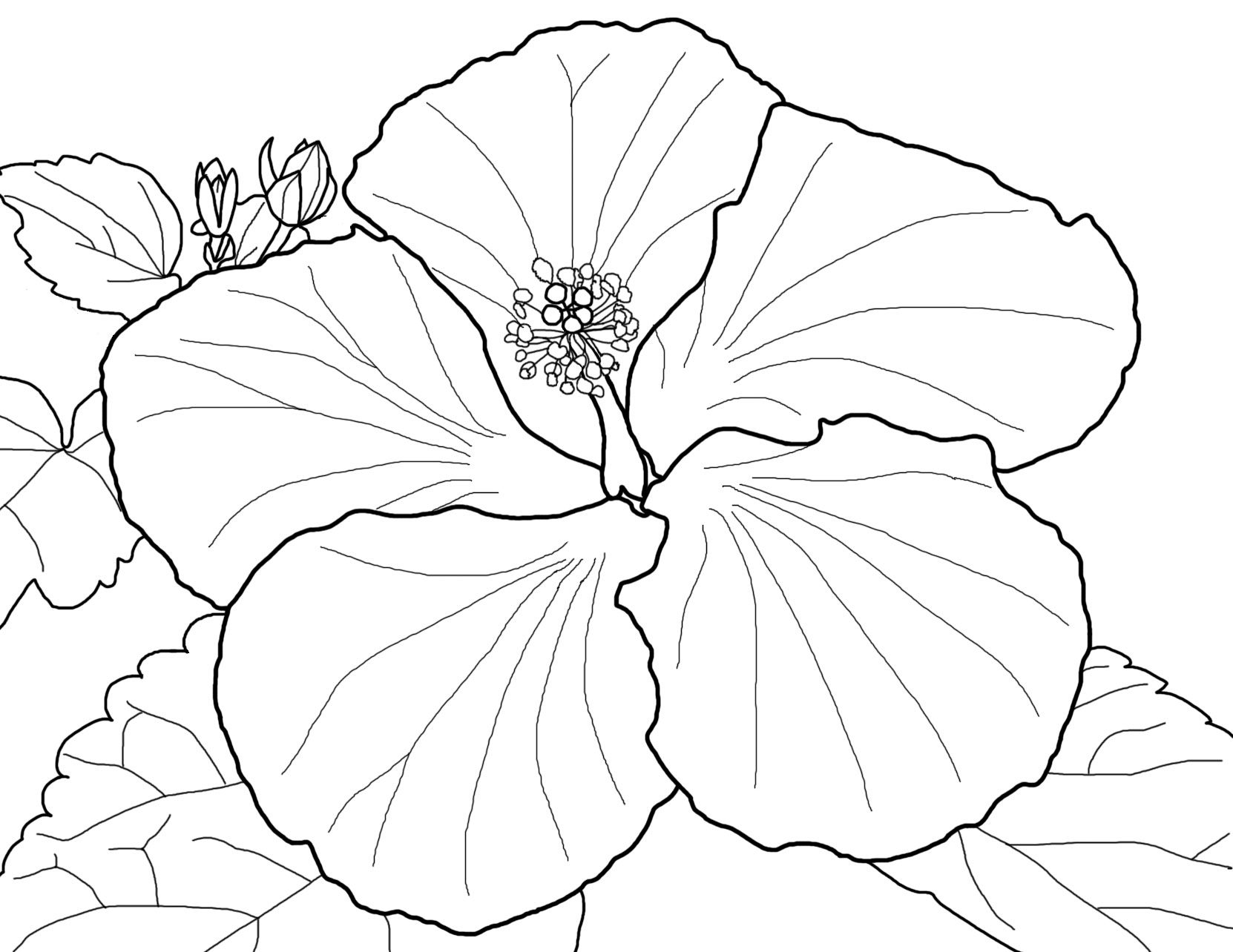 hawaiian flower coloring coloring pages hawaiian flowers collection free coloring flower hawaiian coloring