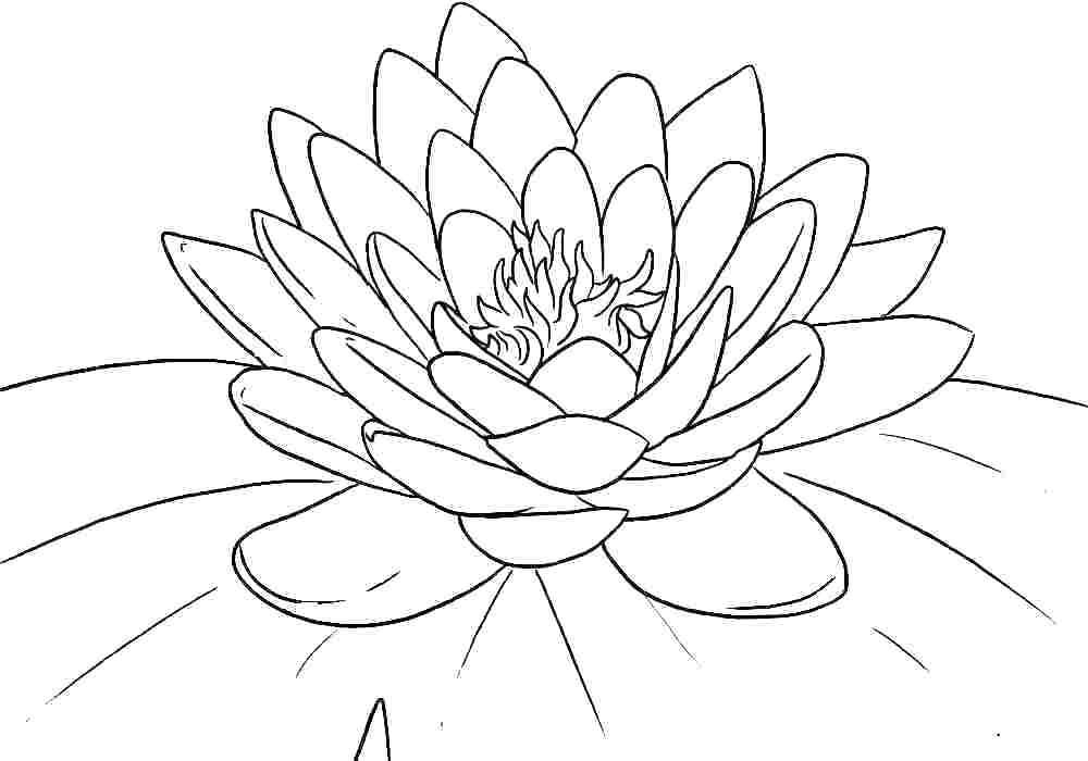 hawaiian flower coloring hawaiian flower coloring pages printable at getcolorings flower coloring hawaiian