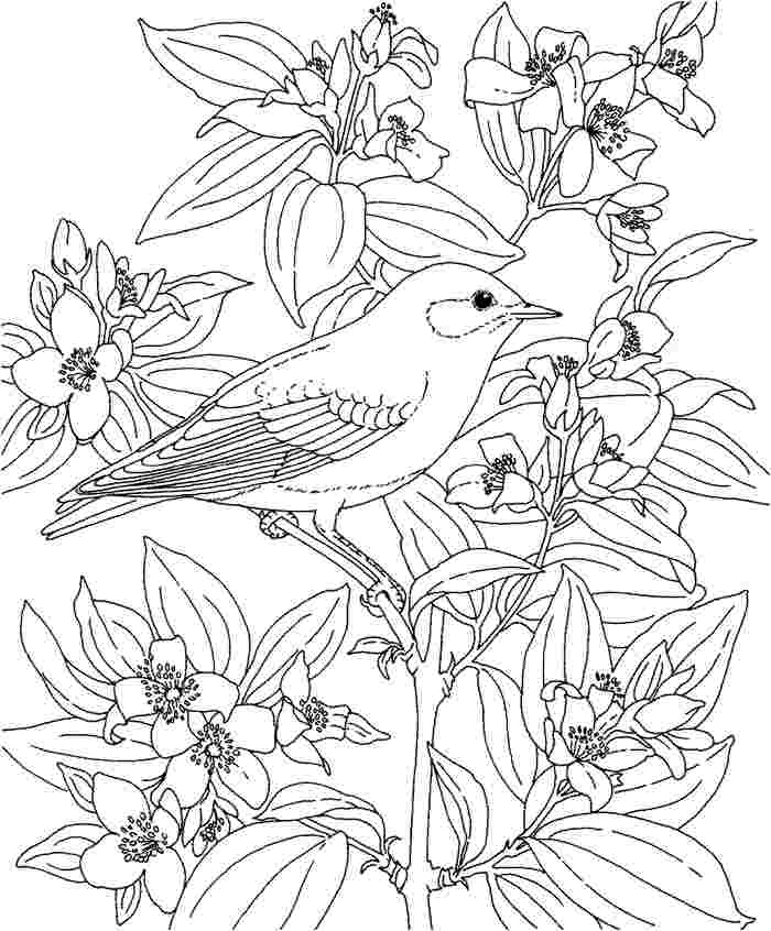 hawaiian pictures to color hawaii state flower coloring page woo jr kids activities to hawaiian color pictures