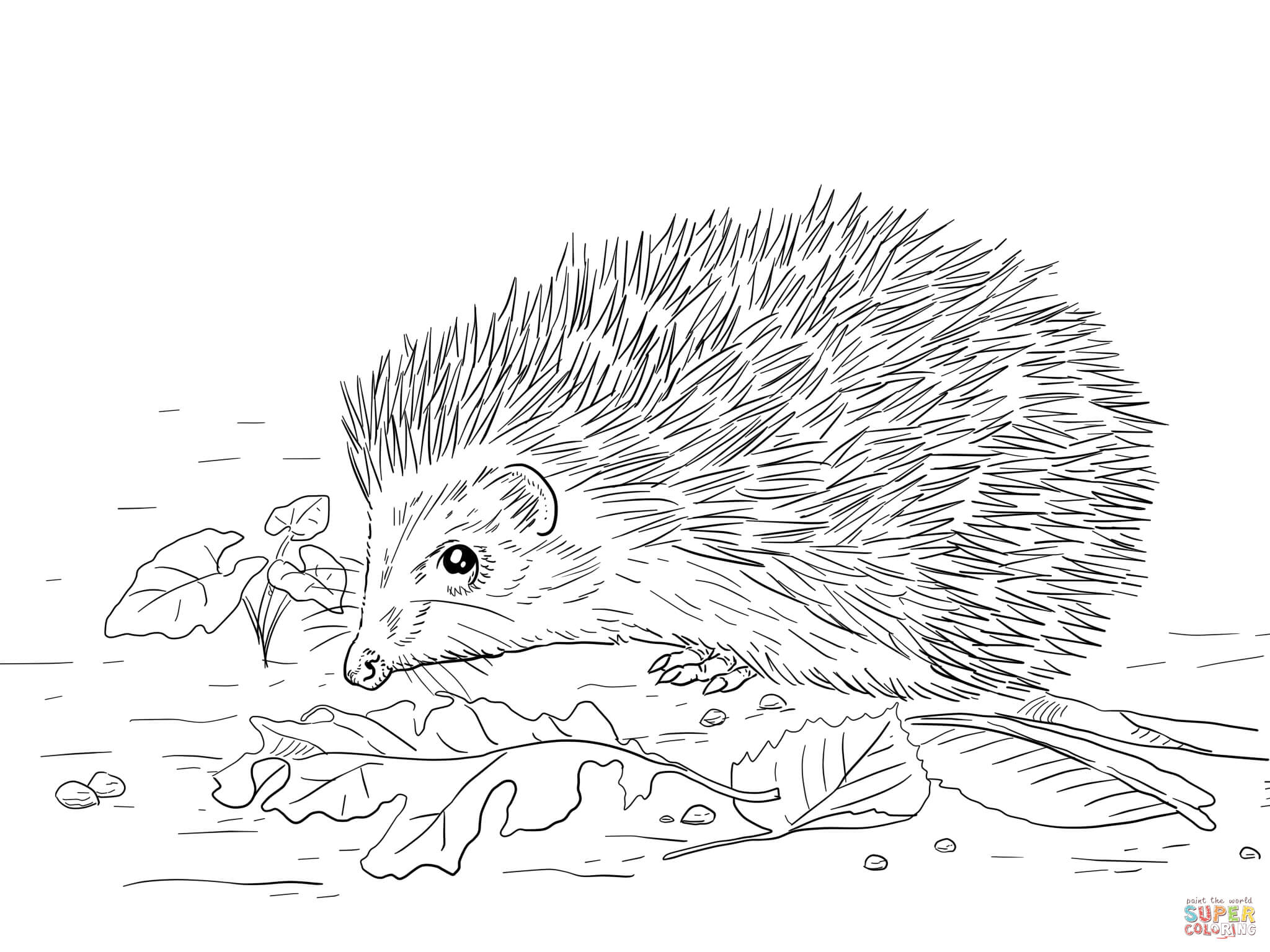 hedgehog colouring sheet animals page 2 literally homeschool colouring sheet hedgehog