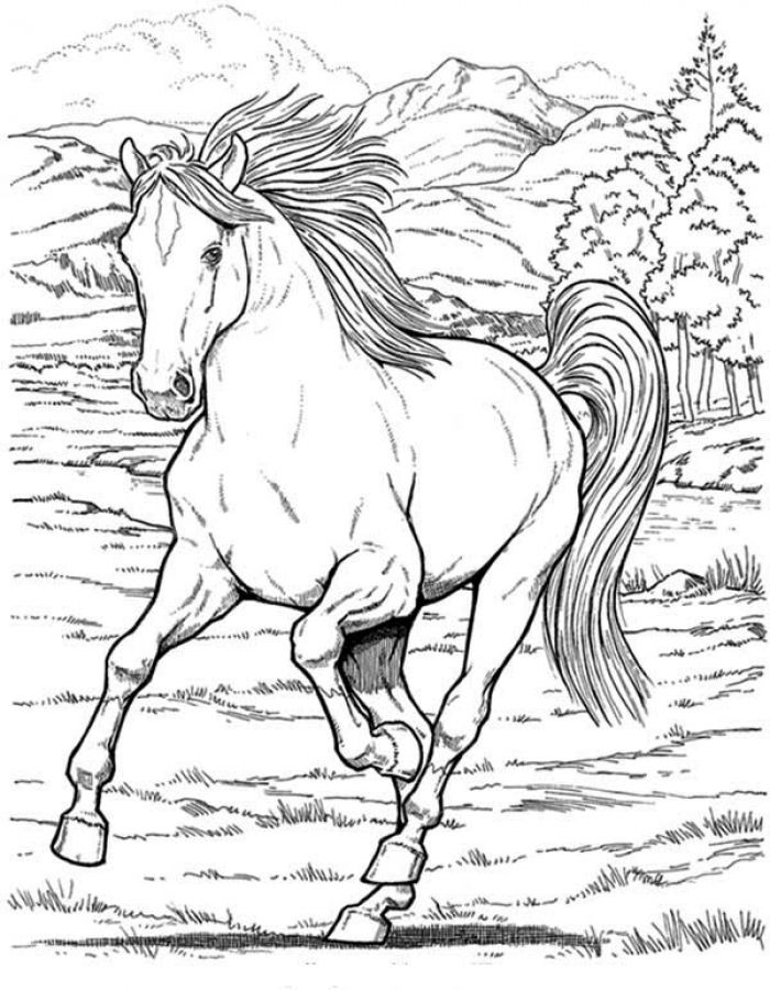 horse coloring pages free cartoon horse coloring pages free printable cartoon horse free horse coloring pages