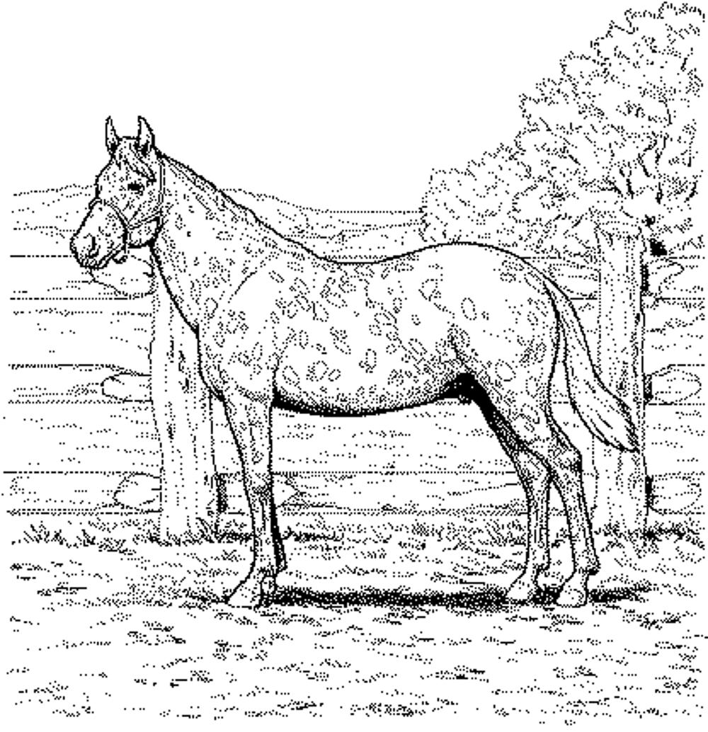 horse coloring pages free horse adult coloring pages at getdrawings free download coloring free pages horse