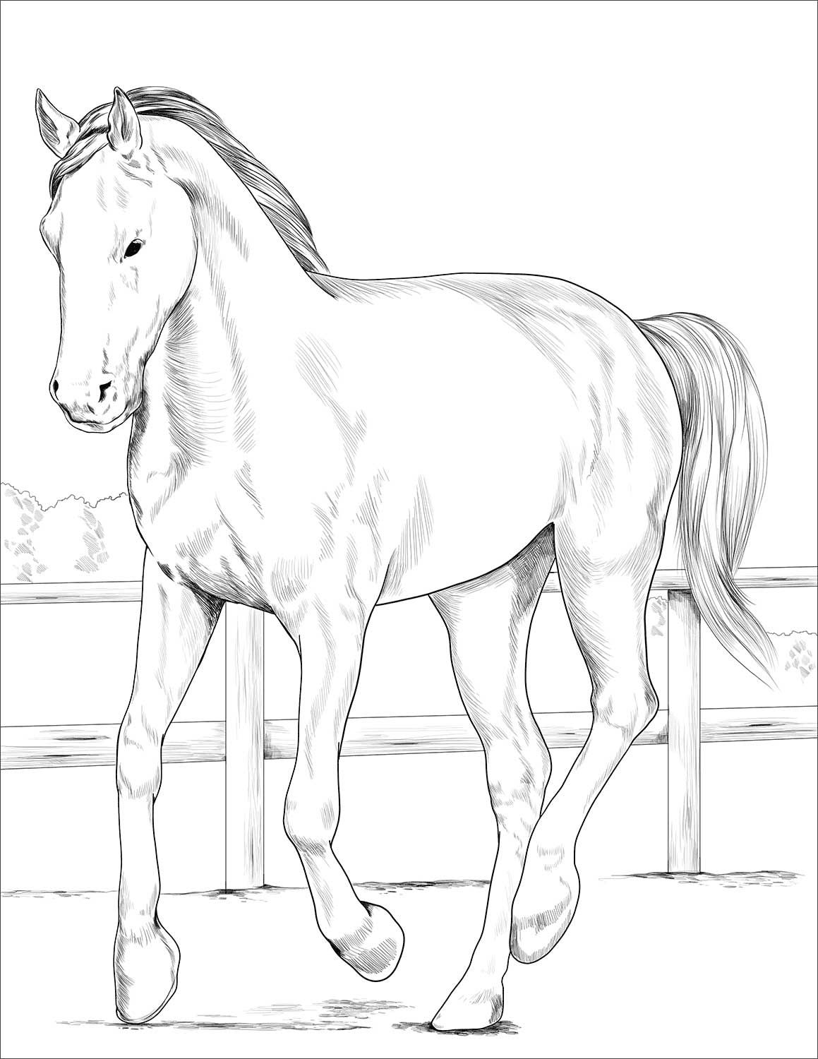 horse coloring pages online animals coloring pages horses coloring pages with coloring pages online horse