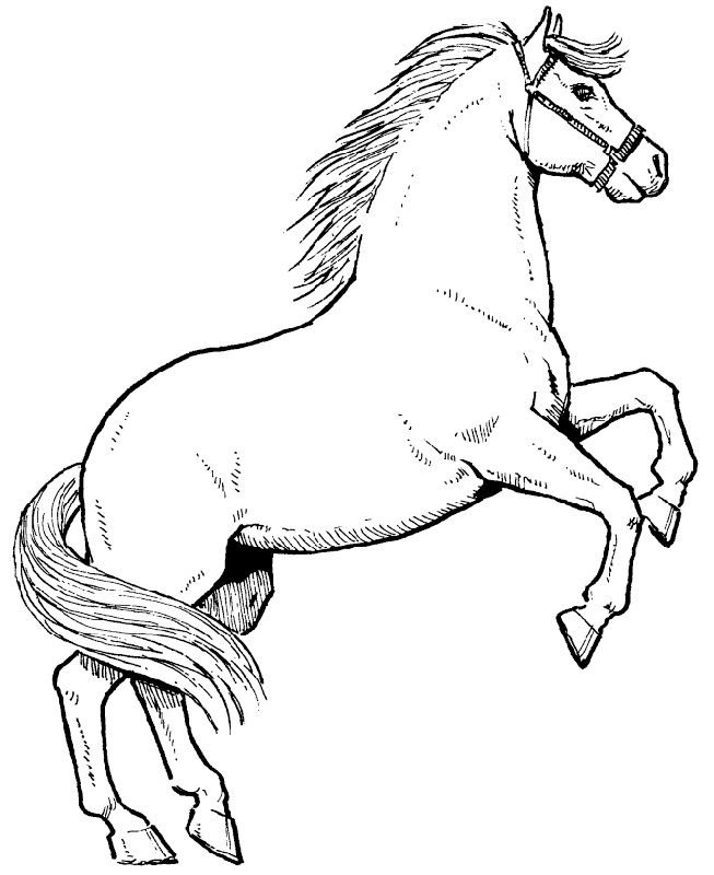 horse coloring pages online free printable realistic horse coloring pages coloring home online pages horse coloring