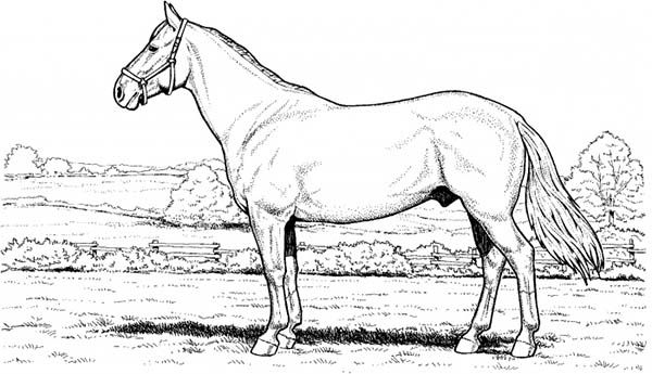 horse coloring pages online horse in the meadow in horses coloring page download pages horse online coloring